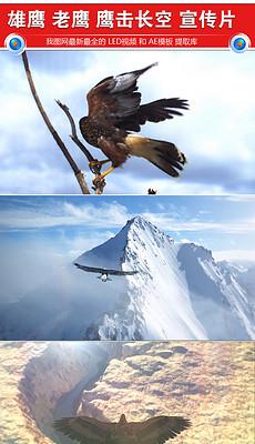 老鹰翱翔图片素材 老鹰翱翔图片素材下载 老鹰翱翔背景素材 老鹰翱翔