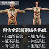 医学人体解剖3D模型
