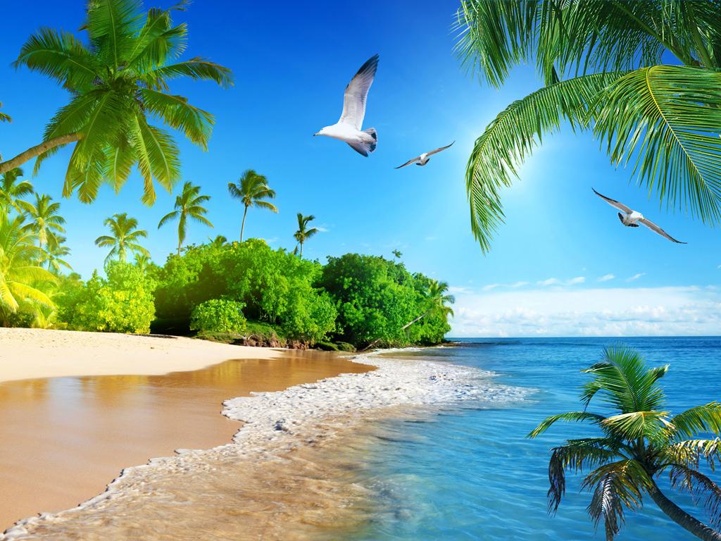 大海风景玄关海鸥椰子树沙滩背景墙图片