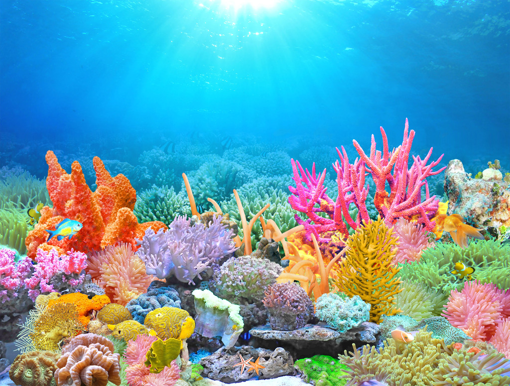 超高清海底珊瑚礁电视背景墙(8米大尺寸)