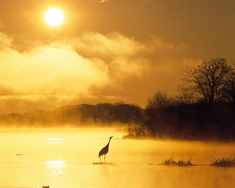 金黄色天空湖泊仙鹤炎热天气背景素材图片设计 高清模板下载 1.76MB 自然风光大全