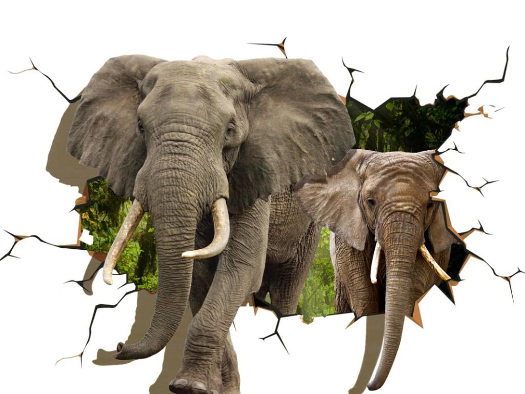 壁纸 大象 动物 1024_768