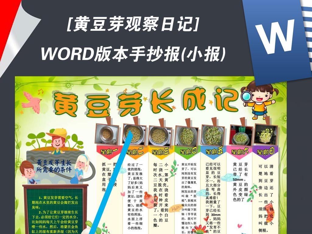 word植物生长黄豆芽观察日记小报手抄