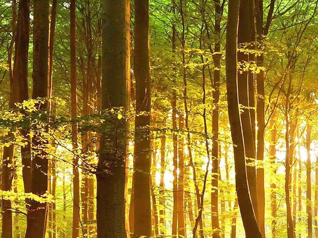 高清阳光透过森林风景画背景墙