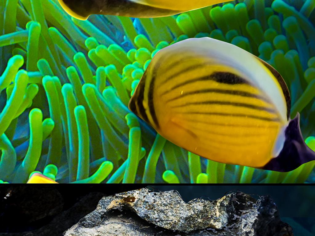 海豚海底水藻珊瑚3d立体画地板地画