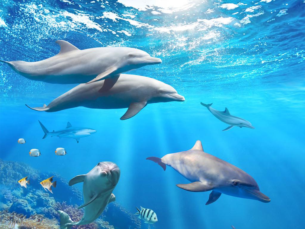 壁纸 动物 海洋动物 鲸鱼 桌面 1024_768
