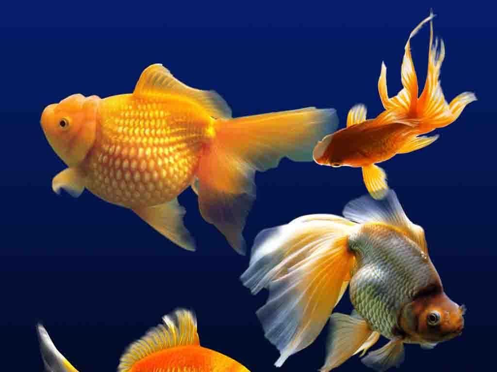 金鱼彩色彩色铅笔彩色名片彩色墨迹彩色线条时尚彩色彩色墨迹素材彩色