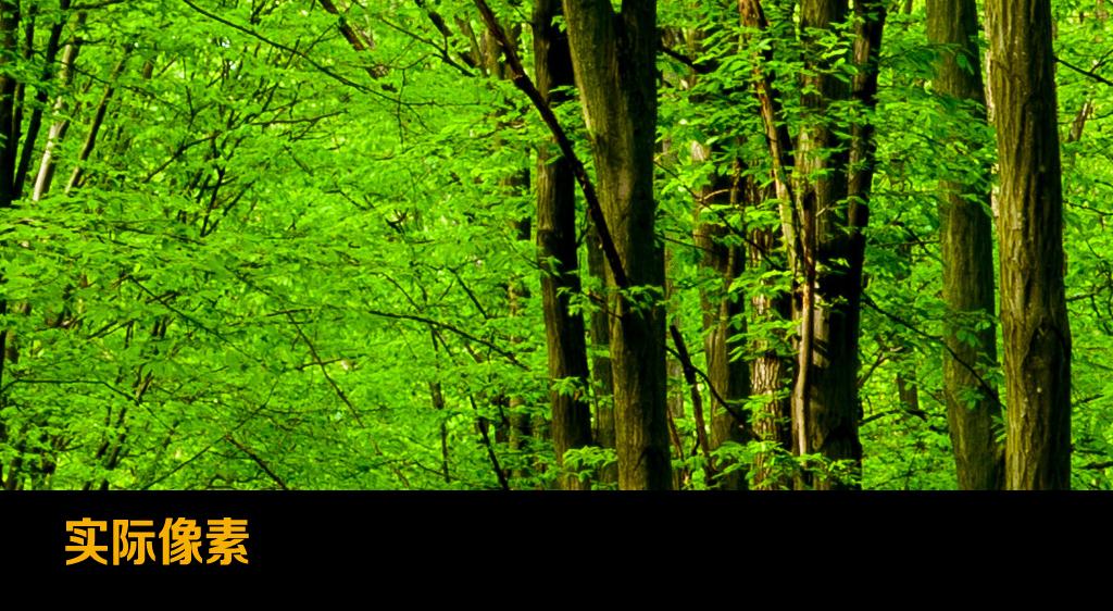 树林小路玄关