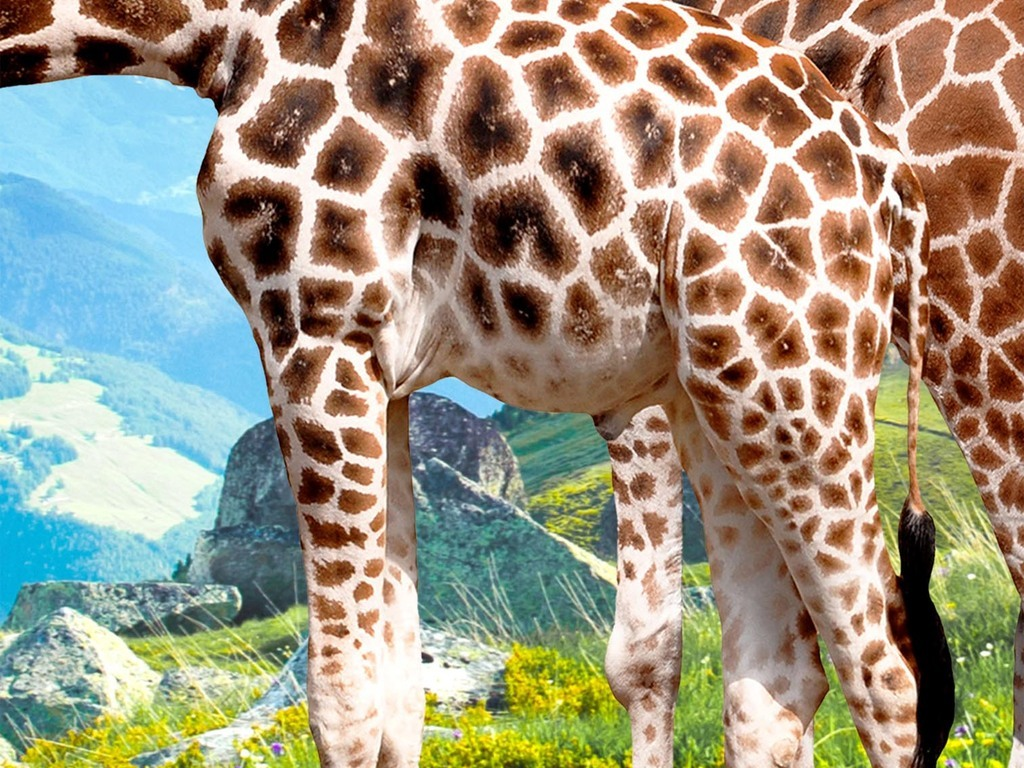 豹 豹子 壁纸 动物 鹿 桌面 1024_768
