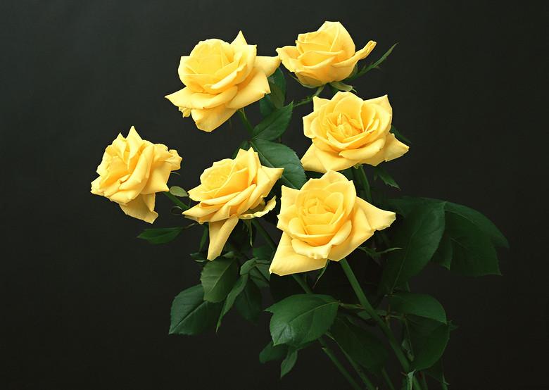 鲜花素材花朵背景唯美花叶花束图库图片设计 高清模板下载 2.86MB 其他大全
