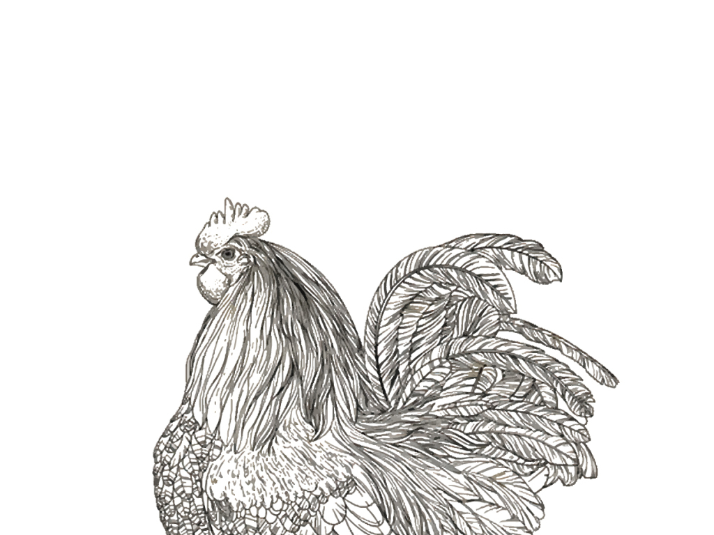 2017丁酉鸡年手绘鸡ai矢量文件