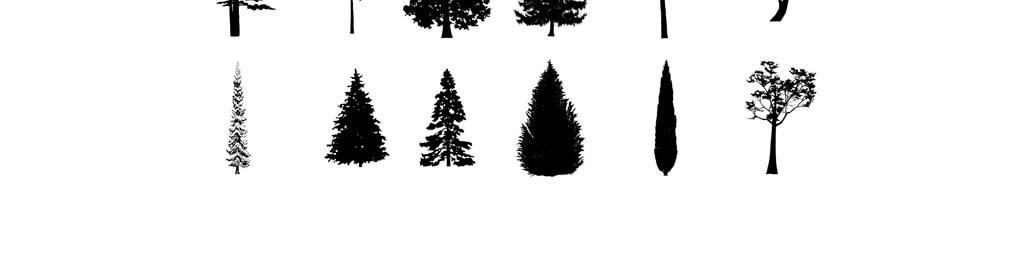 松树柏树景观树树木造型矢量素材