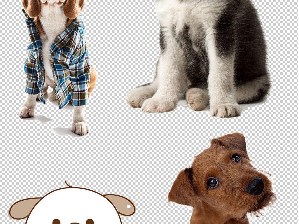 宠物宣传背景装饰海报卡通动物卡通人物卡通背景卡通笑脸卡通小猴子卡