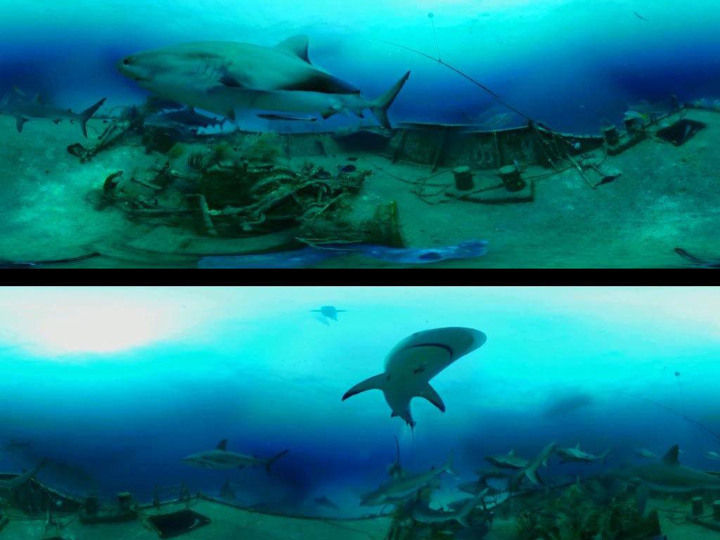 海底世界鲨鱼vr视频素材