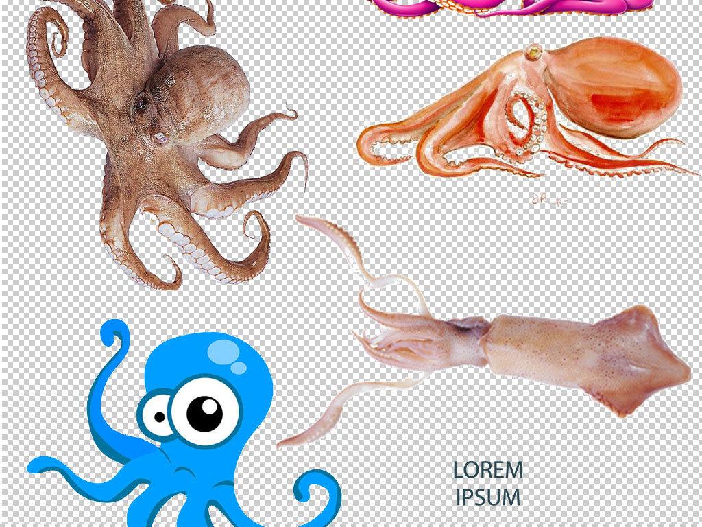 设计元素 背景素材 其他 > 卡通章鱼动物图片海报素材  版权图片 分享