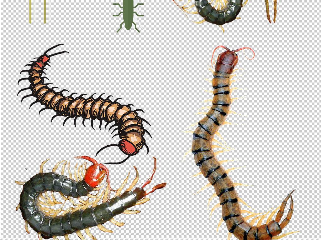 卡通动物                                  可爱蜈蚣