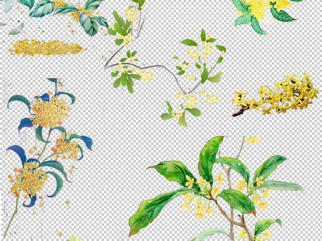 设计元素 背景素材 其他 > 卡通桂花植物图片鲜花素材  版权图片 分享