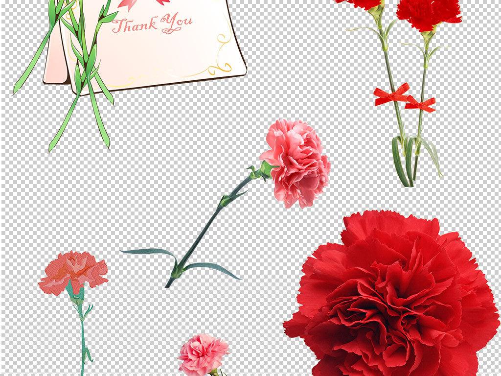 卡通康乃馨植物图片鲜花素材