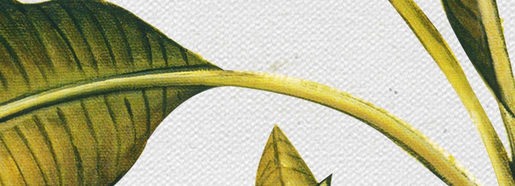 欧式复古手绘芭蕉树电视背景墙壁画