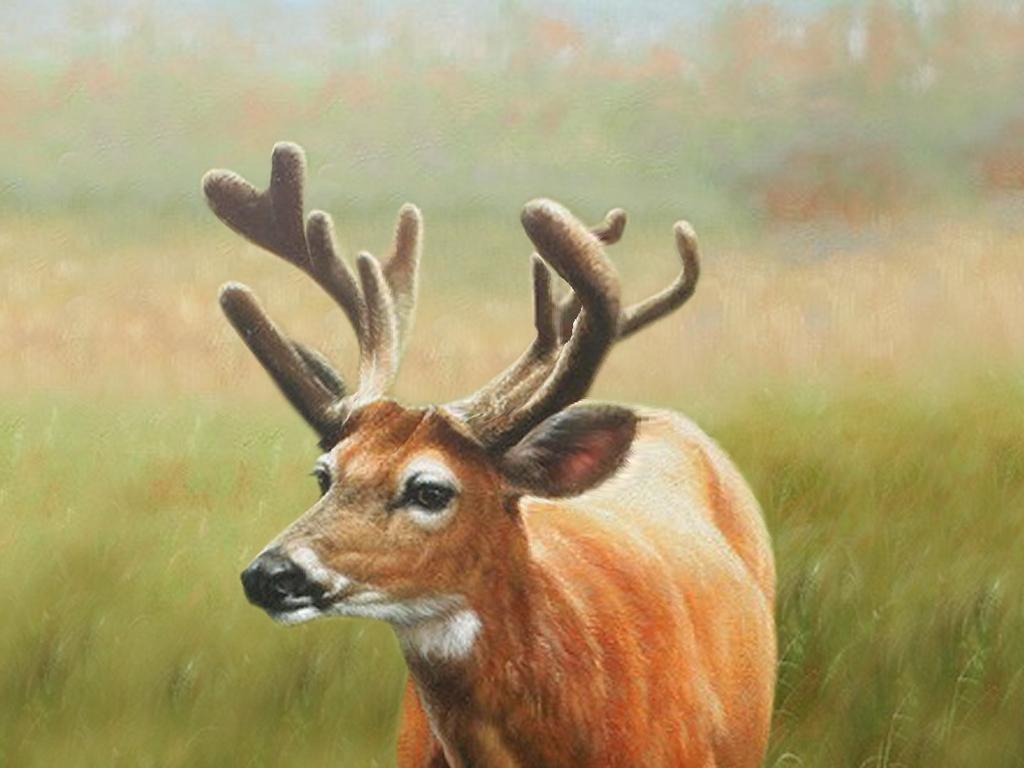 无框画 动物图案无框画 > 麋鹿梅花鹿油画5d动画桢幅光栅立体画序列图