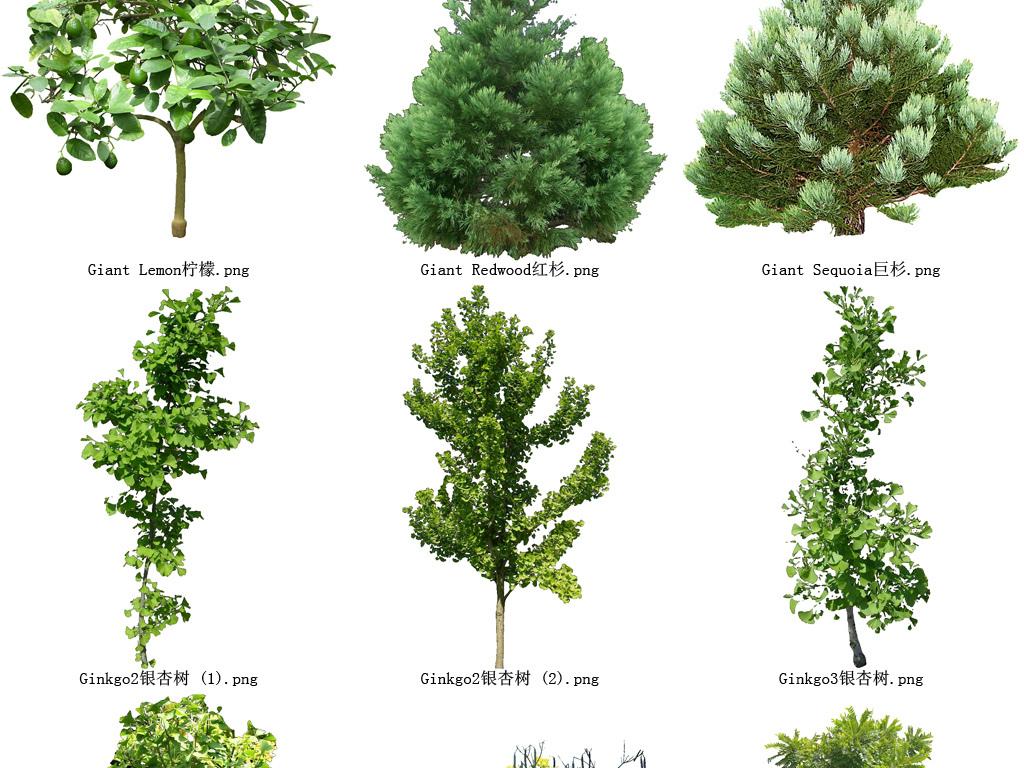 背景设计花草树木国画松树松树山水画松树素材松树国画松树叶子红松树