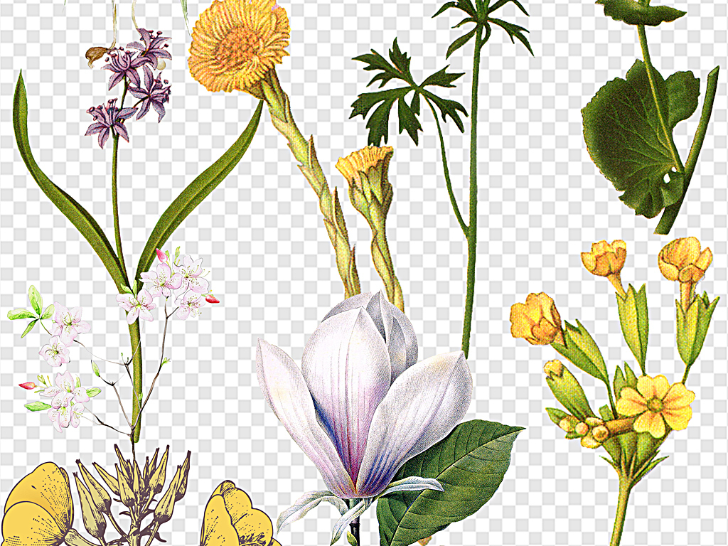 小清新风格花朵梦幻花手绘水彩花