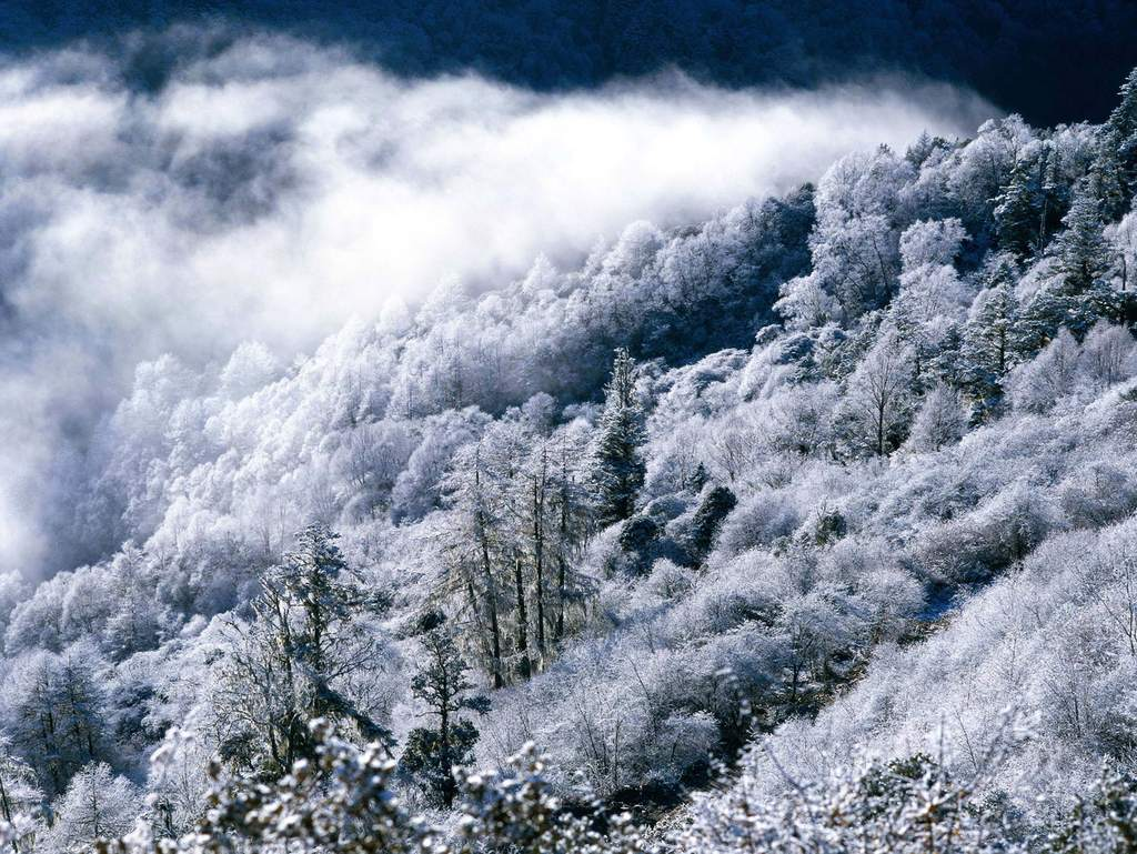雪山风景雪景雪原景色群山山脉树林