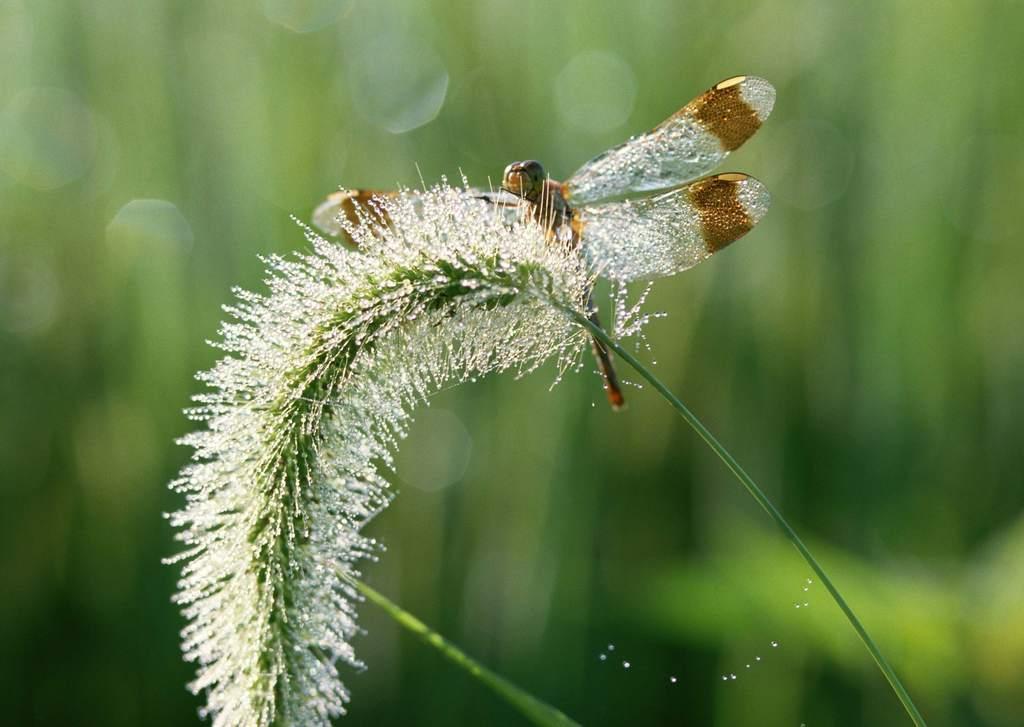 世界物种珍贵珍稀自然摄影生物摄影野生动物自然生态野外乡野植物野外