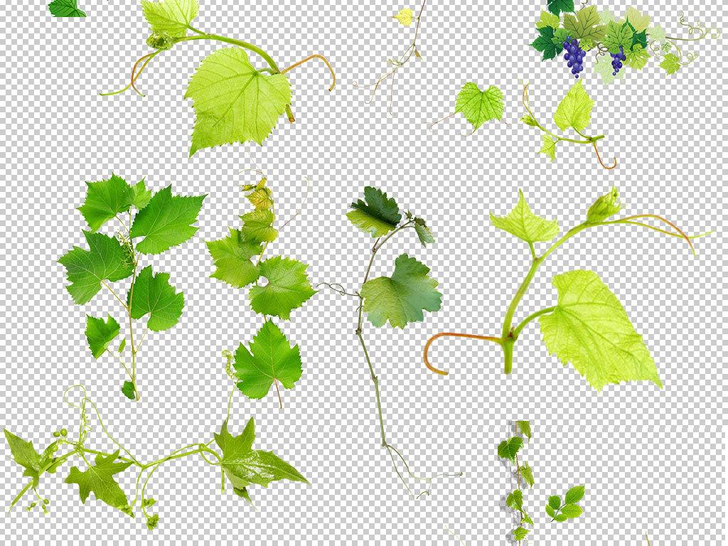 清新绿叶手绘植物图片
