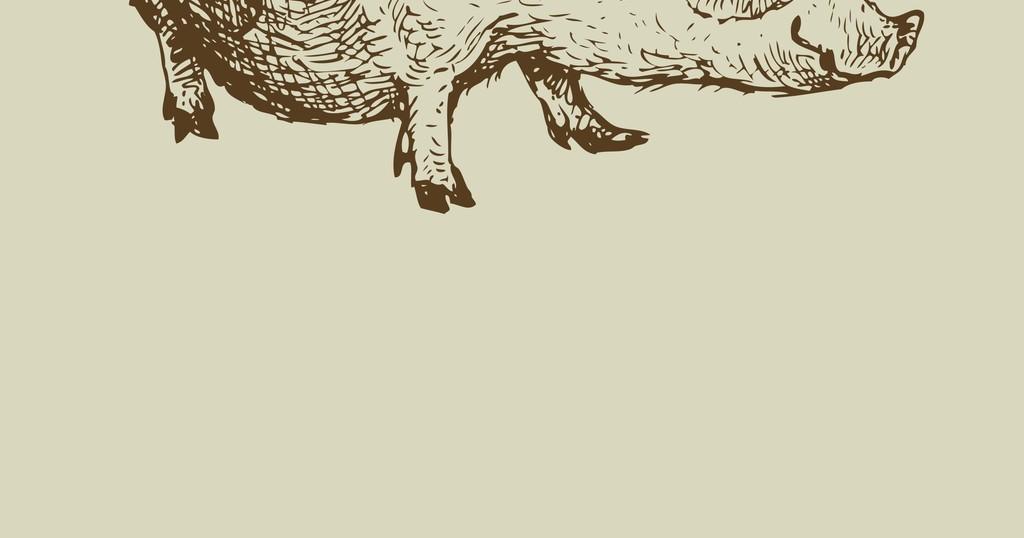手绘猪动物插画