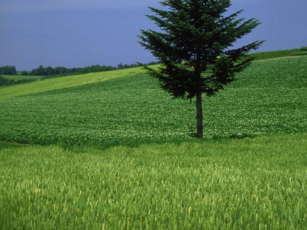 树林蓝天草地草地田园风光图片田园风光高清图片田园风光图手绘田园
