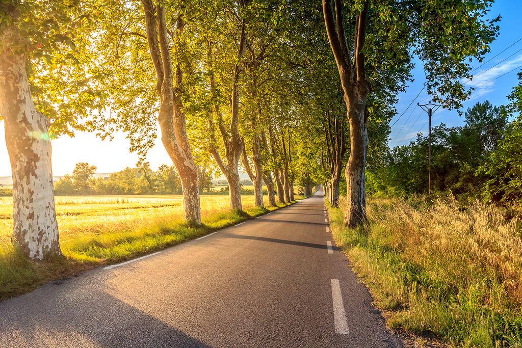 国内摄影图 风光风景 树林图片 > 阳光树林