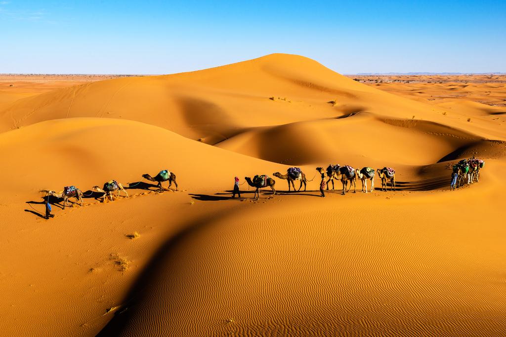 骆驼简笔画颜色