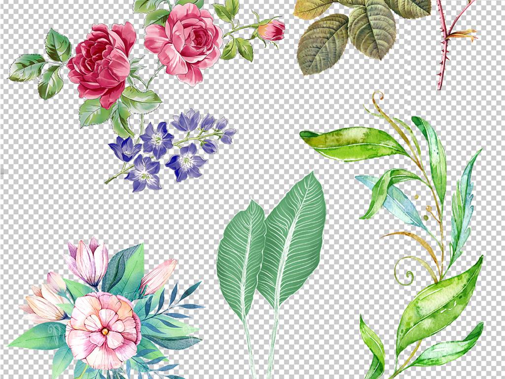 手绘植物高清png素材