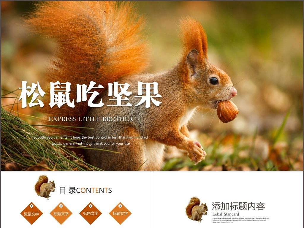 动物松鼠吃松果保护动物动态ppt模板PPT下载 其他大全 编号 16335859