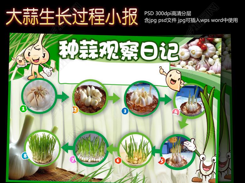电子小报模板植物生长小报-大蒜