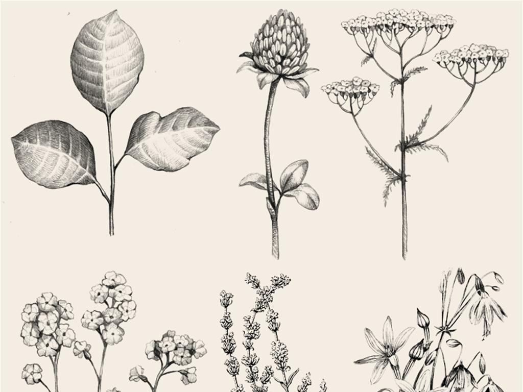 植物蔬菜水果花朵手绘线稿化妆品包装设计素材png