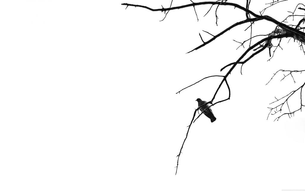 极简中国风简约花鸟黑白中式挂画