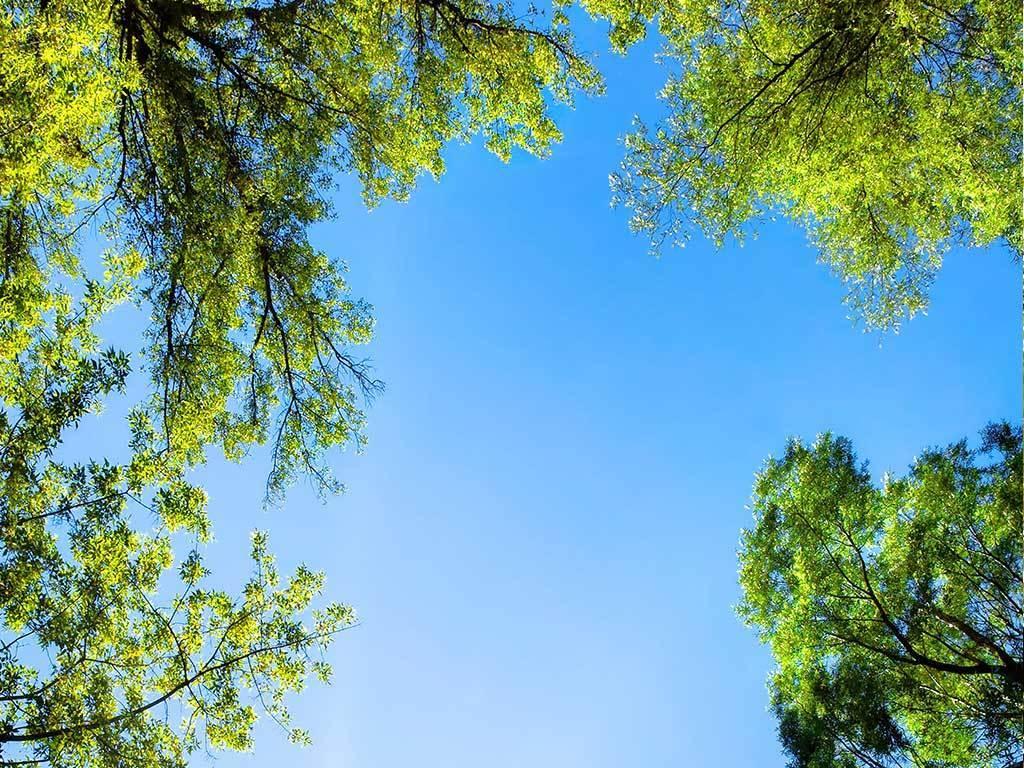 森林天空玄关背景墙图片设计素材_高清模板下载(61.28