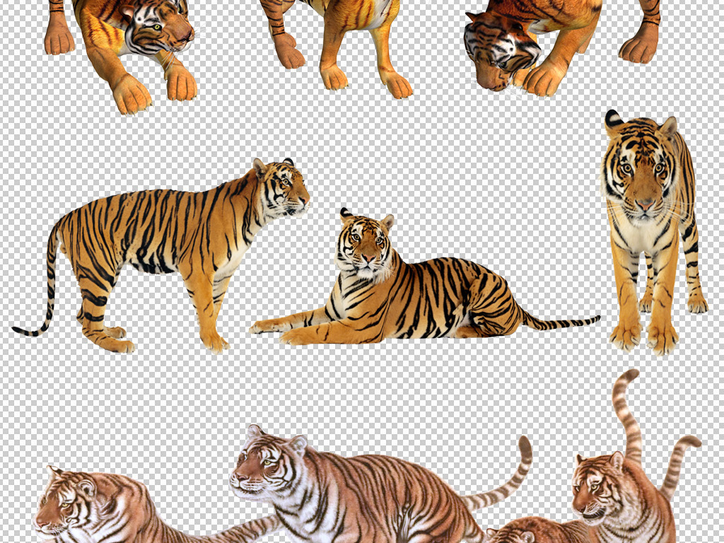 我图网提供精品流行老虎素材老虎图片PNG免抠素材下载,作品模板源文件可以编辑替换,设计作品简介: 老虎素材老虎图片PNG免抠素材 位图, RGB格式高清大图,使用软件为 Photoshop CS6(.png)