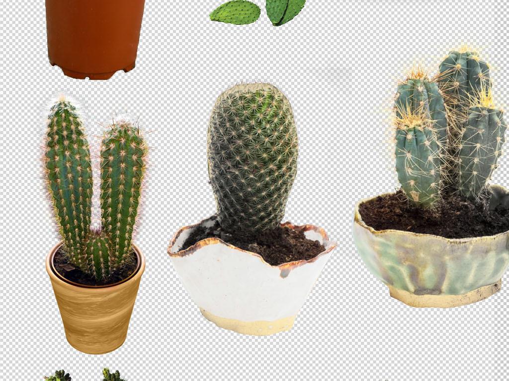 沙漠仙人掌盆栽植物png摄影素材图片下载