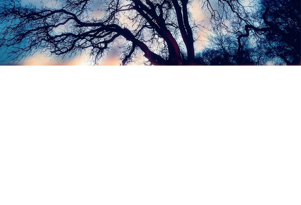 蓝色手绘抽象大树