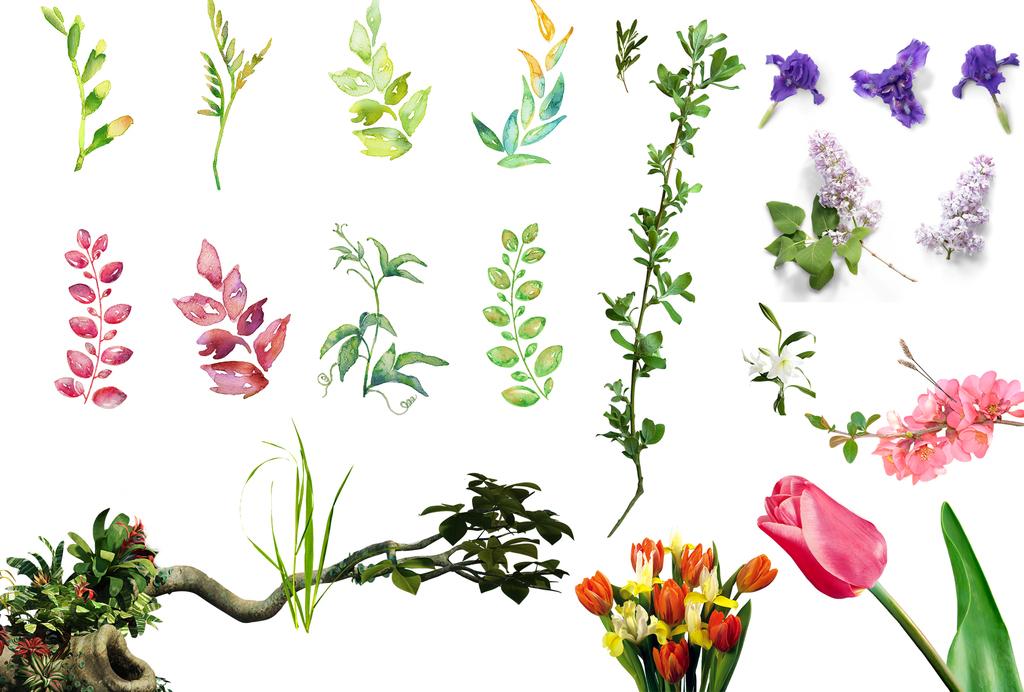 花朵花卉花瓣树叶植物png透明免扣素材