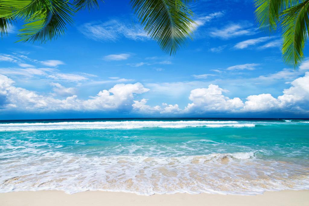 夏天沙滩热带天堂棕榈树海岸风光高清背景图片设计素材 模板下载 3.66MB 其他大全
