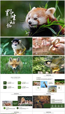 PPT动物世界 PPT格式动物世界素材图片 PPT动物世界设计模板 我图网