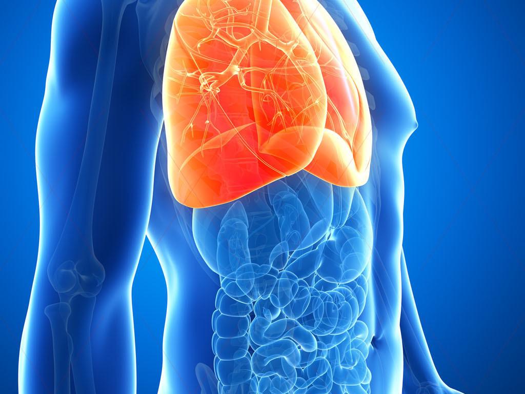 医科人体医学结构图医学研究心肺胃肠