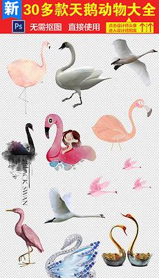 天鹅卡通图片素材 天鹅卡通图片素材下载 天鹅卡通背景素材 天鹅卡通图片