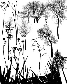 树木笔刷.图片素材 树木笔刷.图片素材下载 树木笔刷.背景素材 树木笔刷.模板下载 我图网