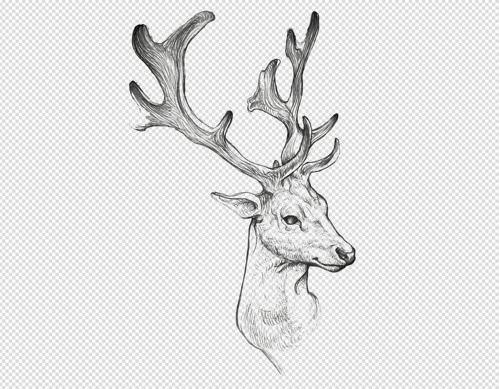 实物卡通手绘插画麋鹿梅花鹿鹿角png素材