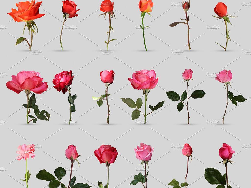 高清七夕情人节玫瑰花瓣创意展示psd分层设计素材模板图片